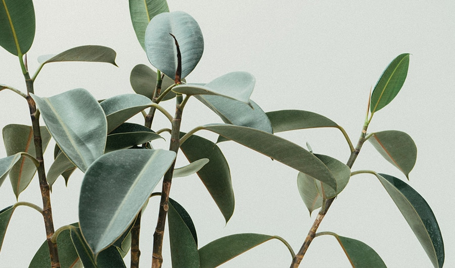 Les plantes dépolluantes version tropicales : must have déco et santé