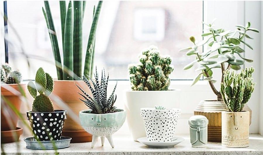 La décoration végétale : de la fraicheur dans votre intérieur
