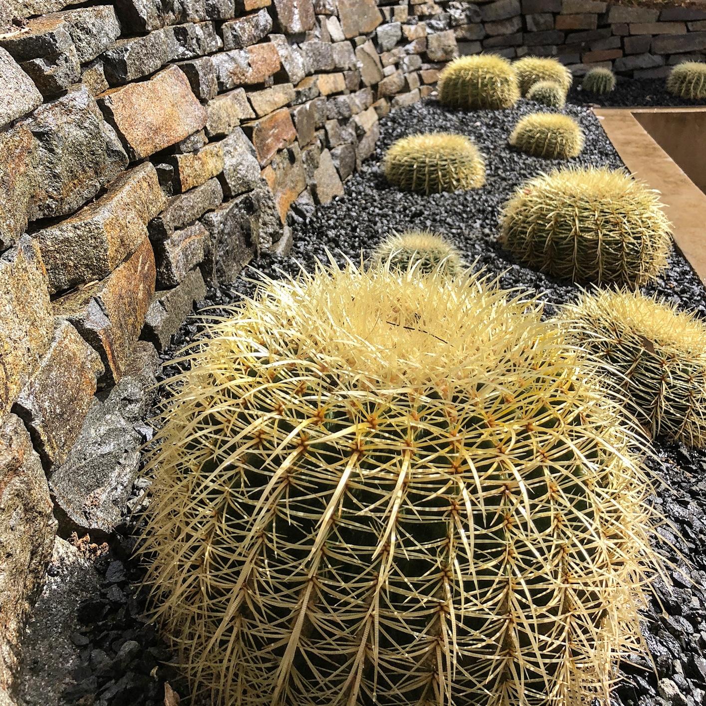 cactus et graviers