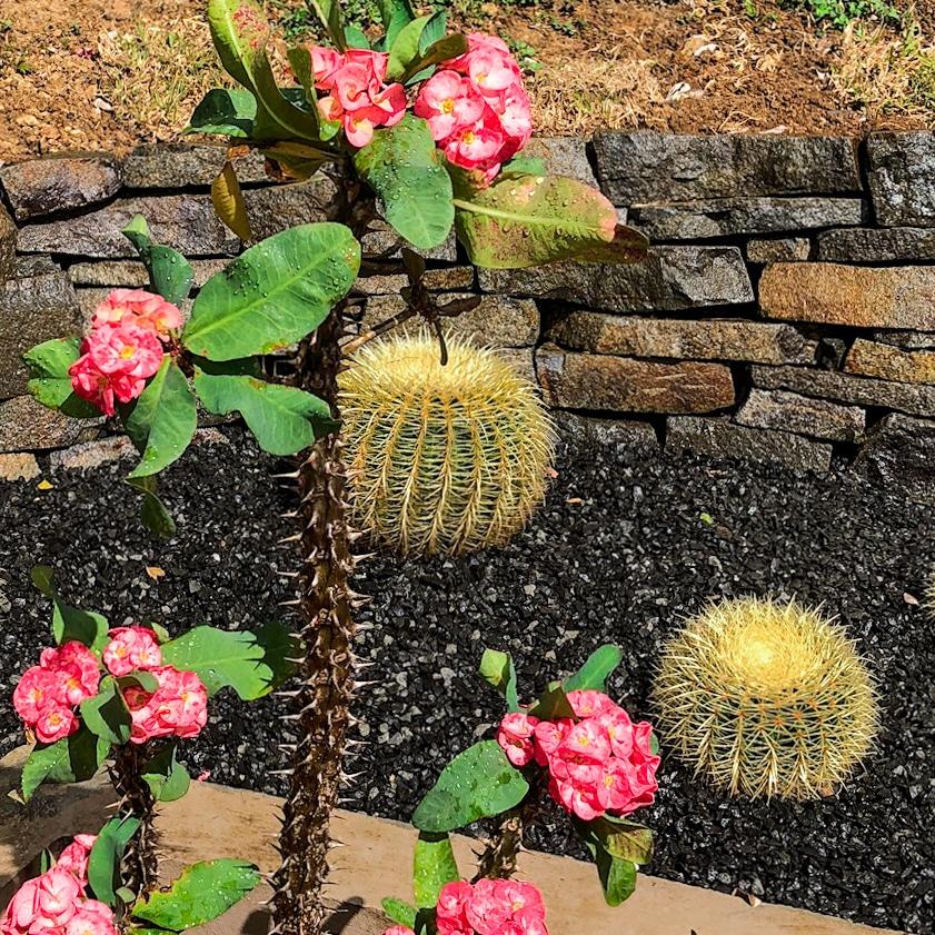 cactus et fleurs rouges