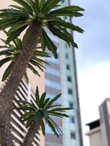 palmiers devant la tour lumina