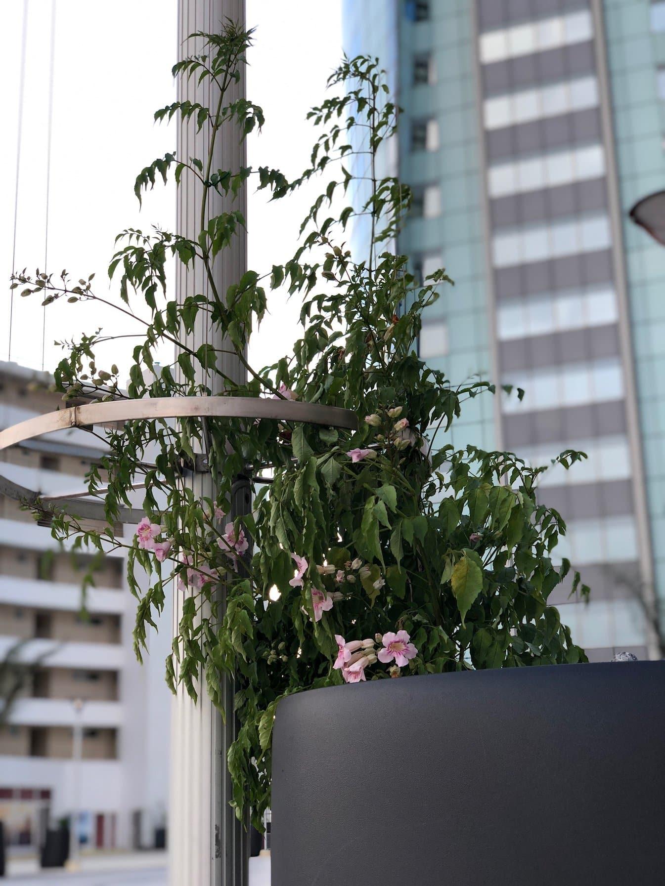 colonne de fleurs