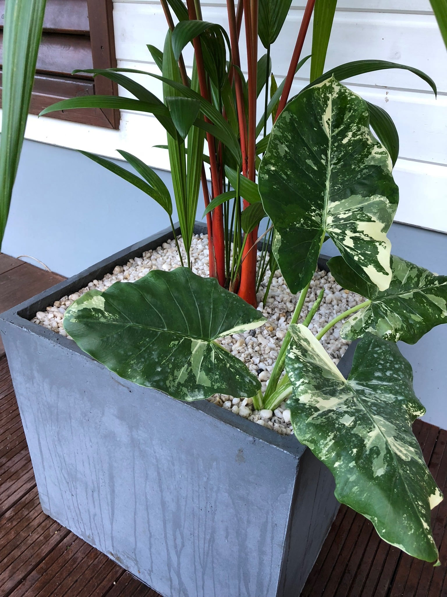 pot de fleurs tropicales