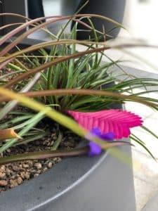 fleurs colorées dans un pot