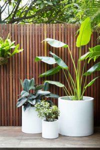 plantes dans pots blancs
